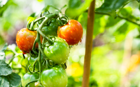 減農薬栽培のはな華ファーム